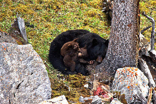 Adam Jewell - Black Bear Family Nap