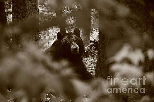 Black Bear Friend by C E Dyer