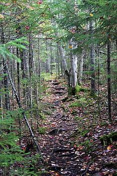 Black Bear Mountain Trail by Brian Lucia