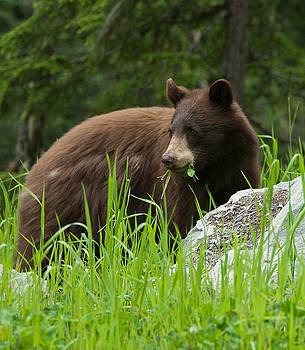 Paul W Sharpe Aka Wizard of Wonders - Black Bears of Whistler IIII