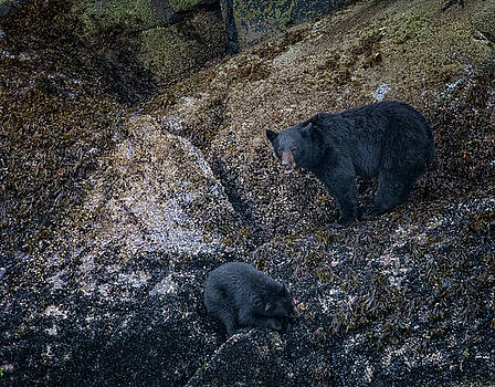 Randy Hall - Black Bears Seafood Buffet