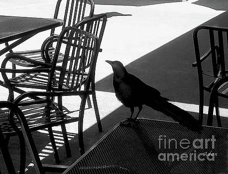 Felipe Adan Lerma - Black Bird At Central Market BW