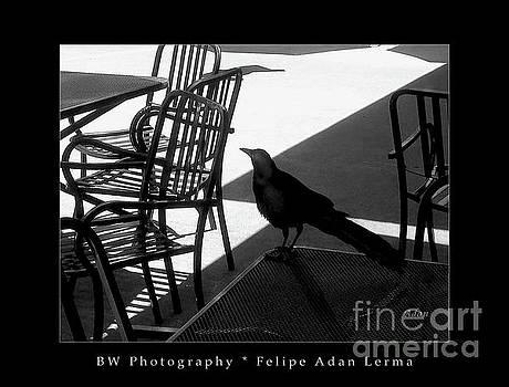Felipe Adan Lerma - Black Bird At Central Market BW Greeting Card Poster