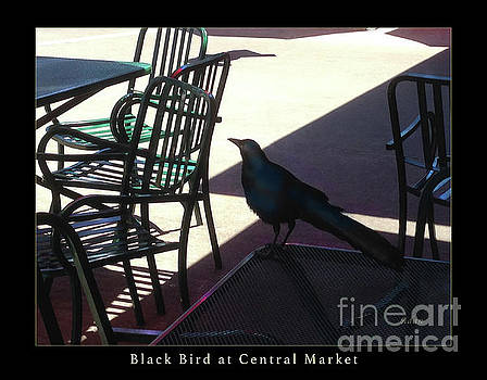 Felipe Adan Lerma - Black Bird at Central Market Greeting Card Poster