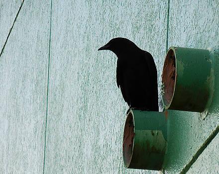 Black bird by Nora Martinez