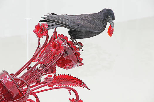 Black Bird Red Silicate Glass Flowers Gray background 2 8282017  by David Frederick