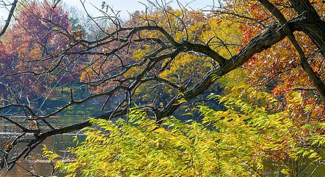 Black Branches Through Bright Autumn Trees by Lynn Hansen