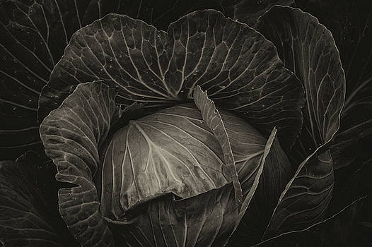 Black Cabbage by James BO Insogna