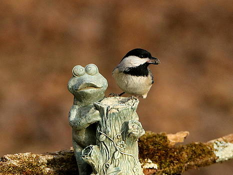 Black-Capped Chickadee and Frog by Sheila Brown