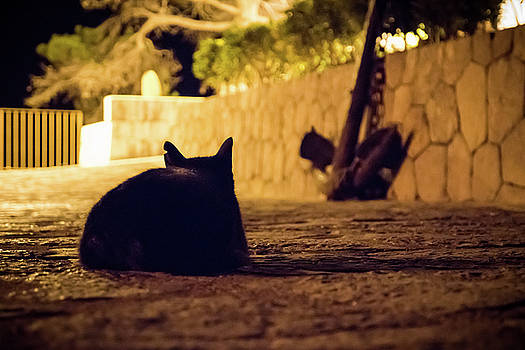 Black cat at night with scar ear watching out by Maximilian Wollrab