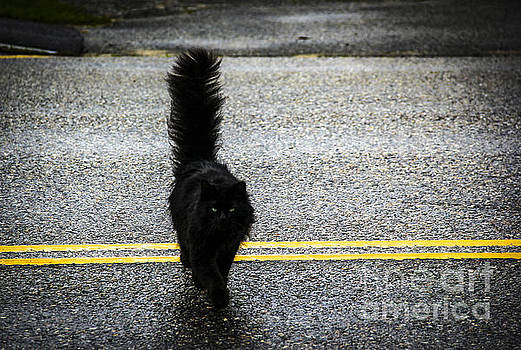 Black Cat Crossing the Street by Marina McLain