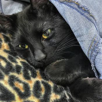 Joann Vitali - Black Cat Fashion- Leopard and Denim