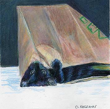Olga Kaczmar - Black cat in the bag