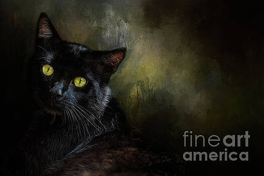 Black Cat Portrait by Eleanor Abramson