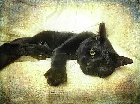 Joann Vitali - Black Cat Yellow Eyes