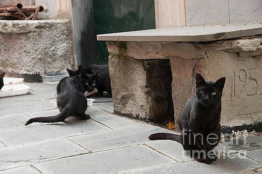 Black Cats by Leonardo Fanini