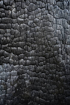 Black charred wood log interior burned in a forest fire by Natalie Schorr
