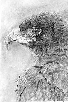 Black Eagle by Barry Jones