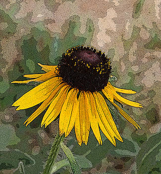 Black Eyed Susan by Marna Edwards Flavell
