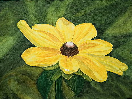 Black-Eyed Susan by Monika Degan