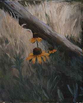 Black Eyed Susans by Stacy Williams