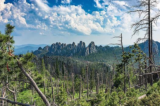 Black Hills National Forrest by Benjamin Sullivan