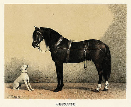 Black horse and a white dog by Emil Volkers