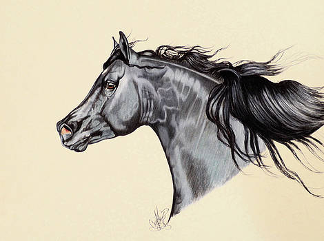 Black Horse Head Study 7 by Cheryl Poland