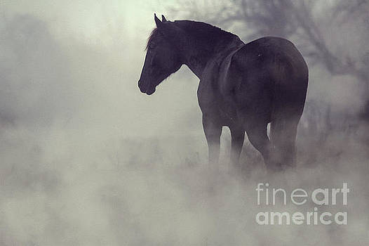 Black horse in the dark mist by Dimitar Hristov