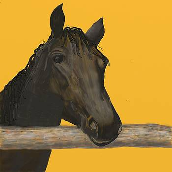 Black Horse by Suanne Forster