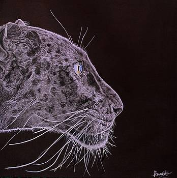Black is Black by Albane Devalet