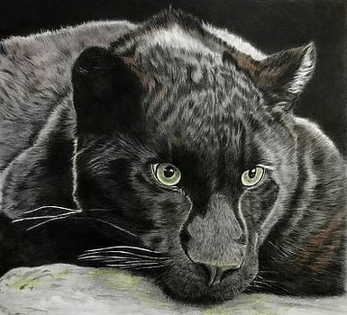 Black Jaguar by Michelle McAdams