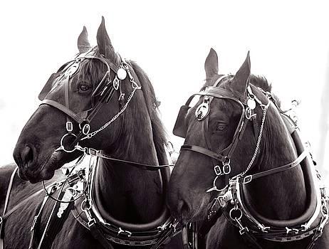 Black Knights- Percherons by Susie Gordon
