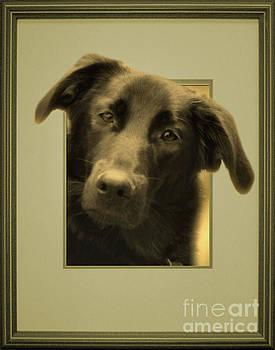 Black Labrador Peeking Out by Smilin Eyes  Treasures