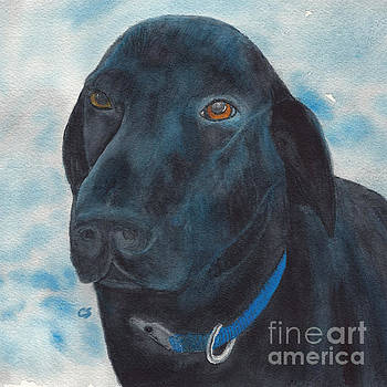 Black Labrador with Copper Eyes Portrait II by Conni Schaftenaar