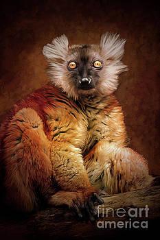 Black Lemur by Tara Richardson