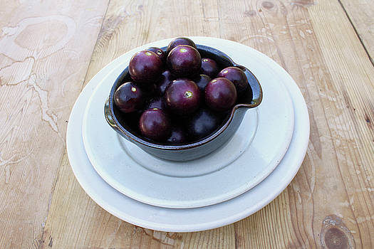 Black Muscadine Scuppernong Grapes by Natalie Schorr