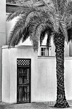 Black n White Sylvester Palm  by C W Hooper