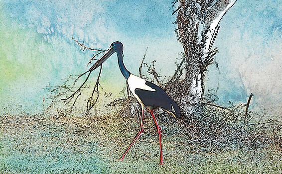 Manjot Singh Sachdeva - Black Neck Stork