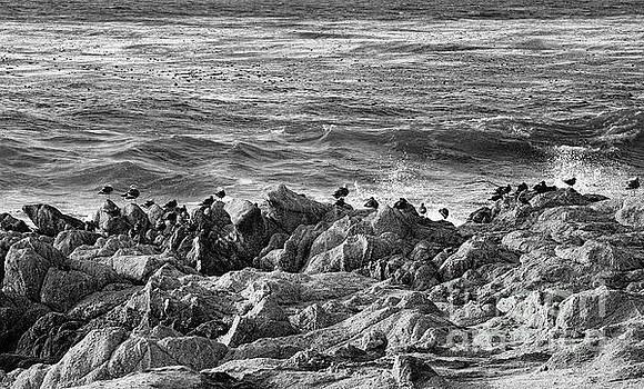 Chuck Kuhn - Black Pebble Beach
