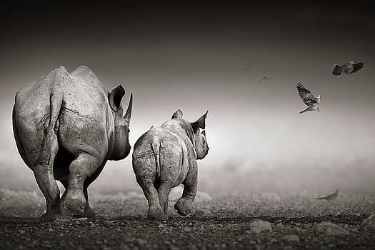 Black Rhino cow with calf  by Johan Swanepoel
