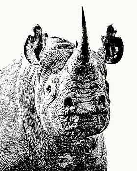 Black Rhino Portrait by Scotch Macaskill