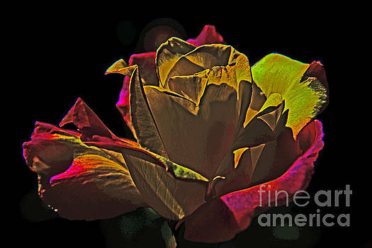 Black Rose by David Frederick