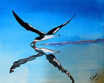 Black Skimmer by W Gilroy