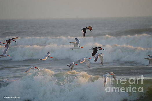 Black Skimmers and Gulls by Tannis Baldwin