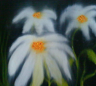 Black Sky Daisies by Portland Art Creations