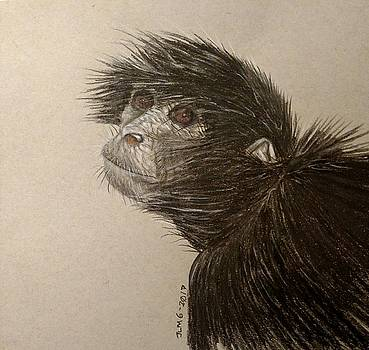 Black Spider Monkey by Joan Mansson