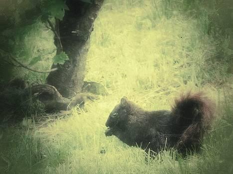 Black Squirrel by Kenneth Krolikowski