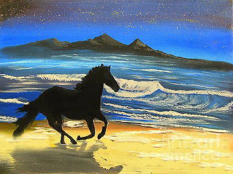 Black Stallion at Dusk by John Morris