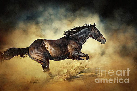 Black Stallion horse Galloping like a devil by Dimitar Hristov